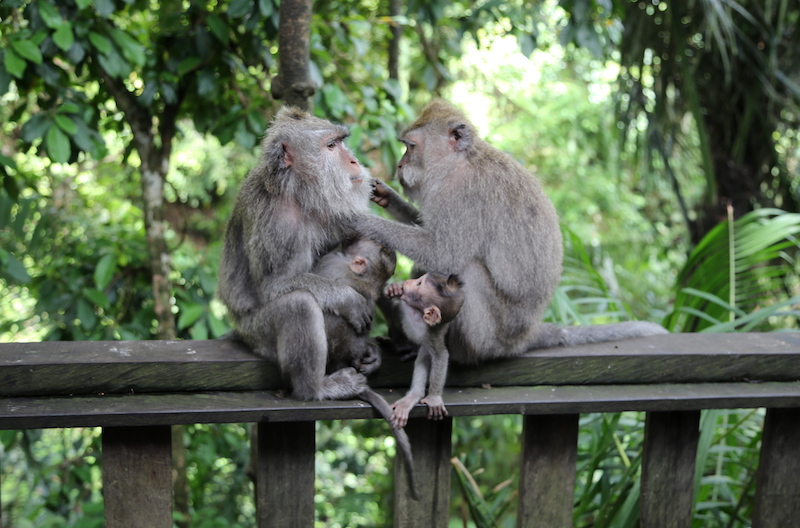 Bali Cruise Points of Interest: Monkey Temple Forest