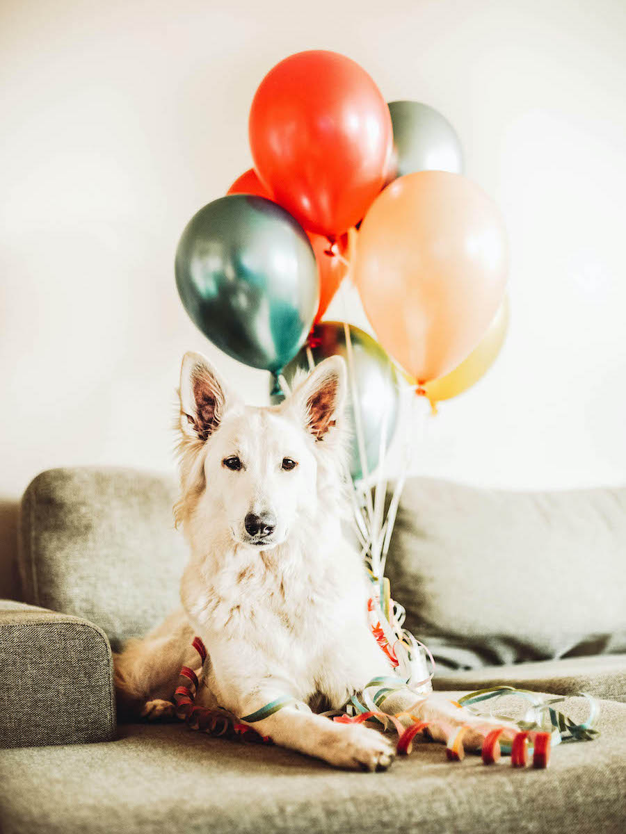 Have a Doggie Birthday Party