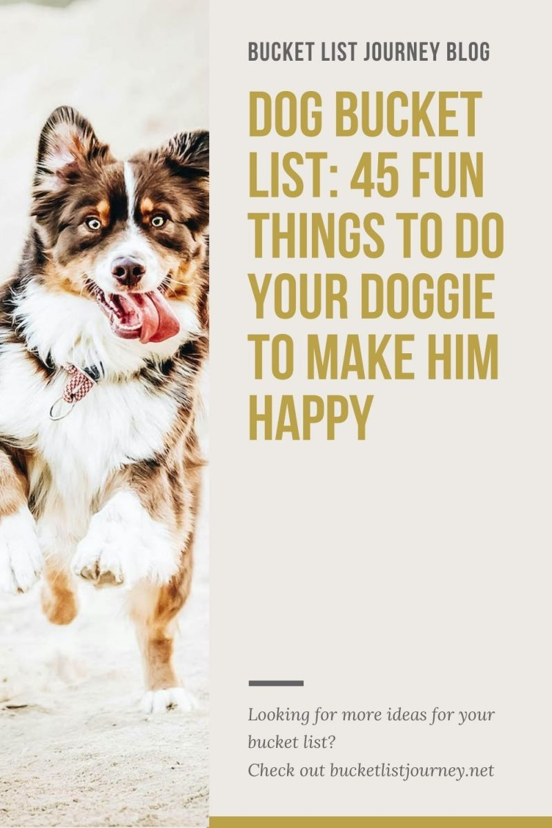 Dog Bucket List: Fun Activities & the Best Things to Do With Your Friendly Doggie to Make Them Happy