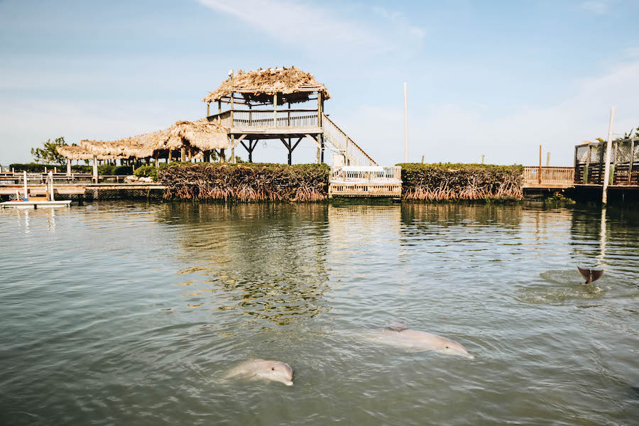 Key West Activities: Dolphin Research Center