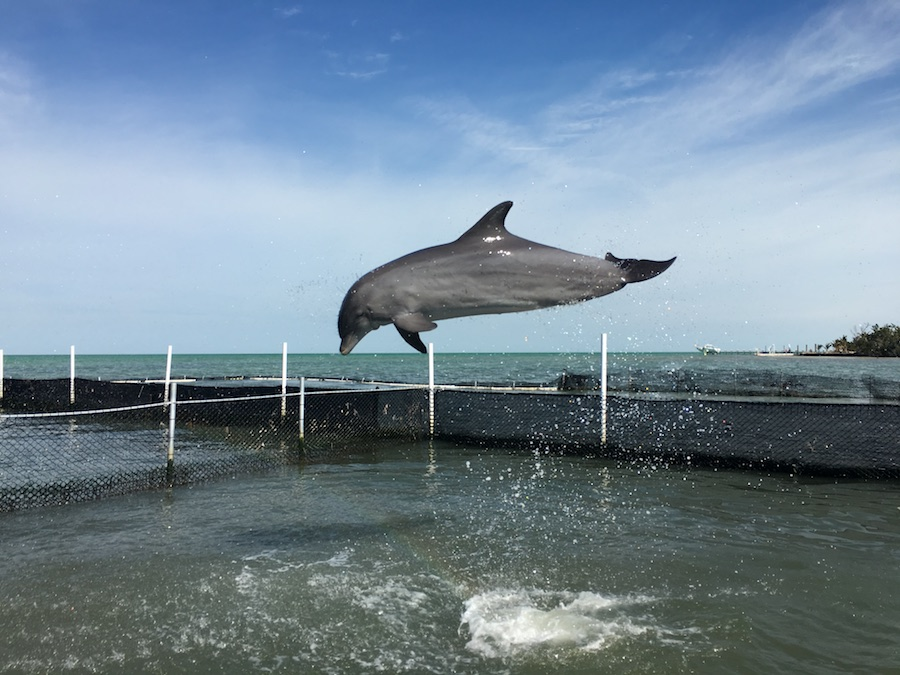 Visit the Dolphin Research Center   Florida Keys Islands Bucket List: Best Things to do in Key West & Beyond