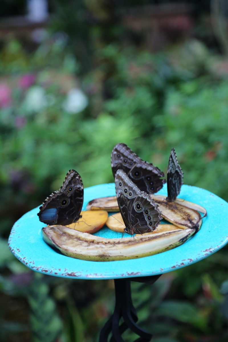 Butterfly Conservatory   Florida Keys Islands Bucket List: Best Things to do in Key West & Beyond