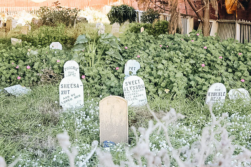 Pet Cemetery at the Presidio