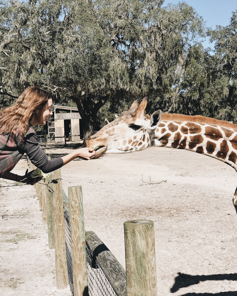 Annette White feeding a giraffe in Florida