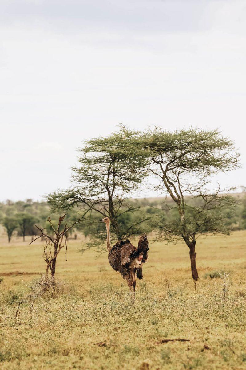 Four Seasons Safari Lodge in Serengeti National Park