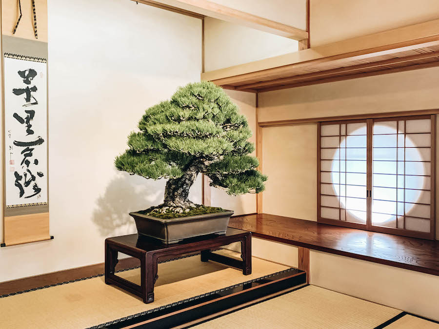 Omiya Bonsai Art Museum in Saitama Prefecture