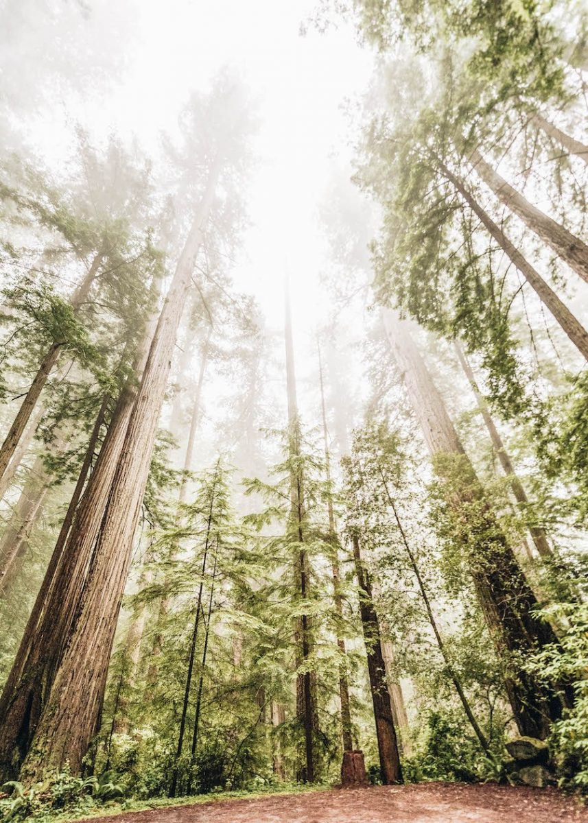 US Park List: Redwood National Park