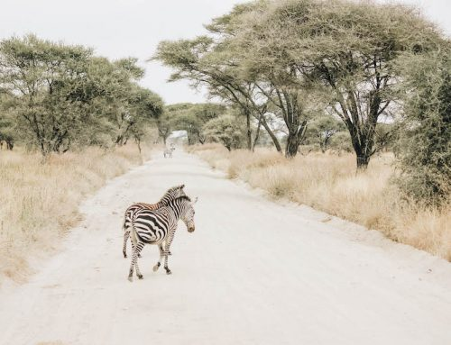 Safari Animal Bucket List: 35 Top African Wildlife to Spot