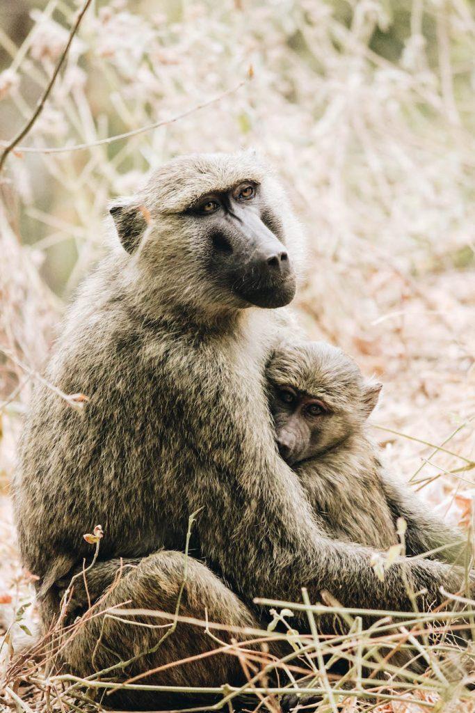 Crowned Craine: Safari Animal