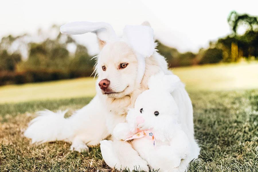 Wear Bunny Ears for Easter