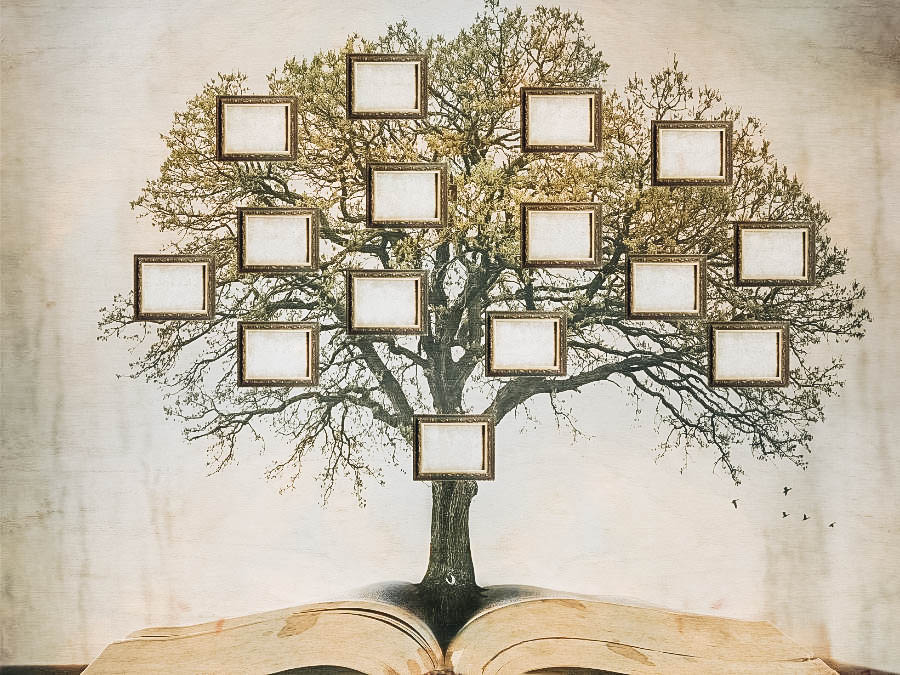 A picture of a blank family tree