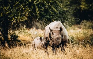 Rhinos in the middle of Safari