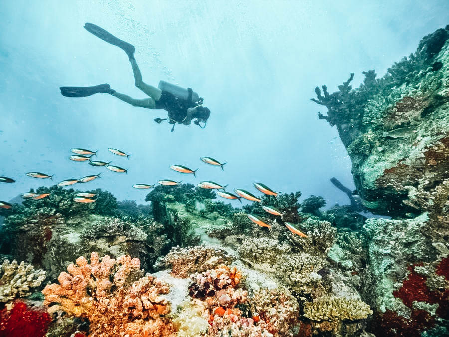 A scuba diver swimming with the fishes near the coral reefs