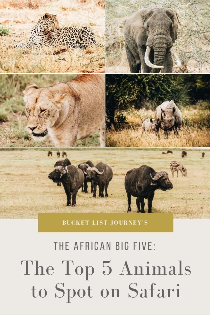 The African Big Five: The Top 5 Animals to Spot on Safari