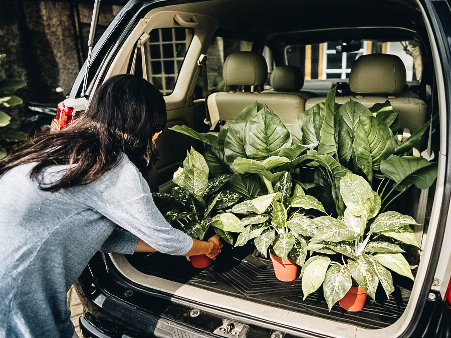 A woman getting the plants out of the car