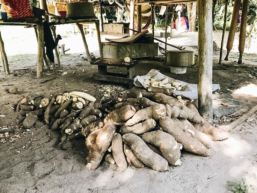 A picture of Cassavas