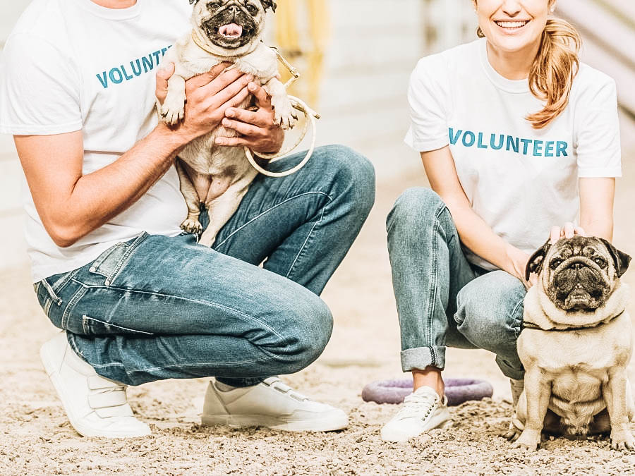 A couple volunteering on an animal shelter