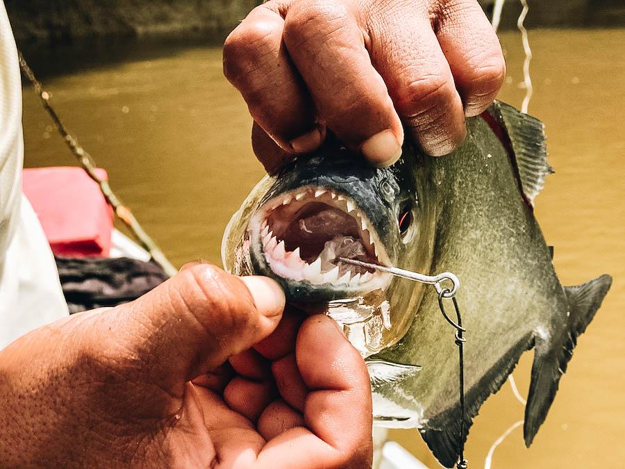 A person showing a piranhas teeth