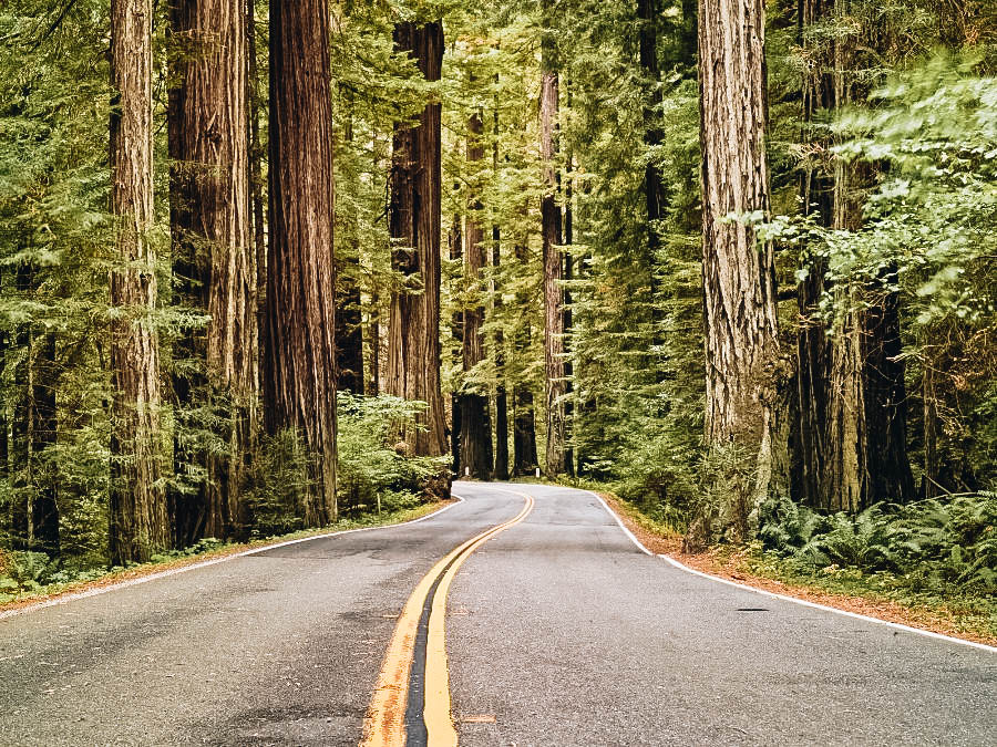 Drive the Avenue of the Giants