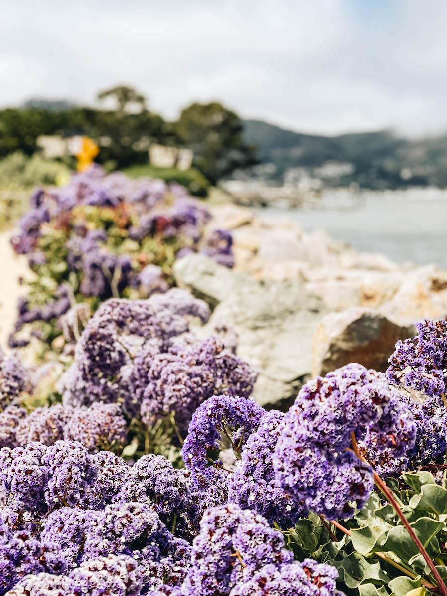 Flowers along the Tiburon Historical Walk