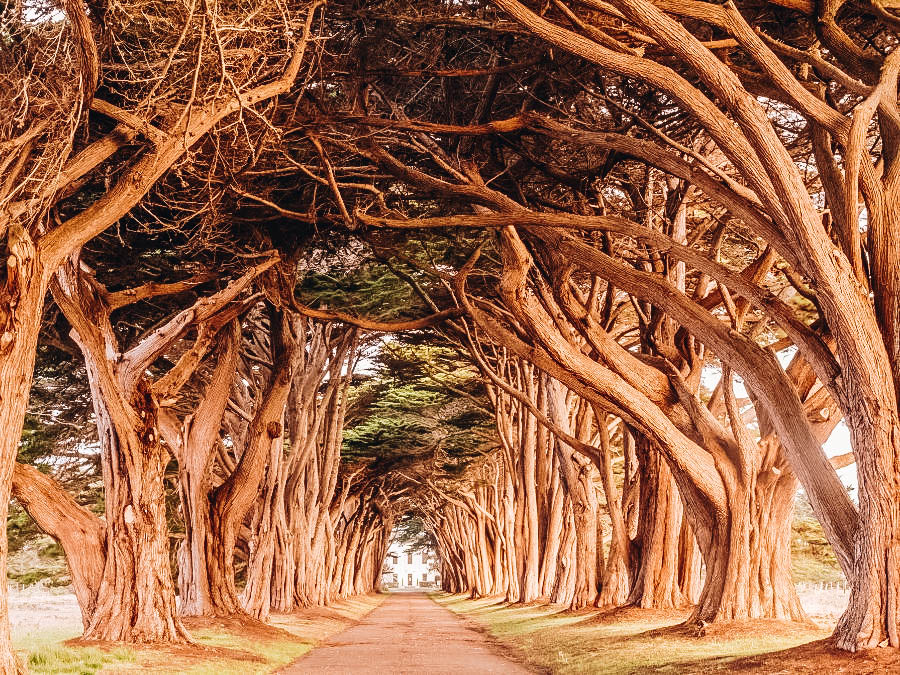 Walk Through the Cypress Tree Tunnel in Point Reyes