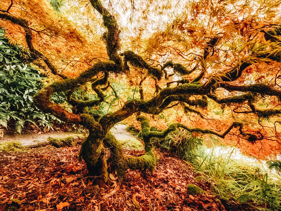 Stroll Through Kubota Garden