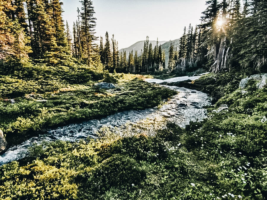 Hike in The Olympic National Forest