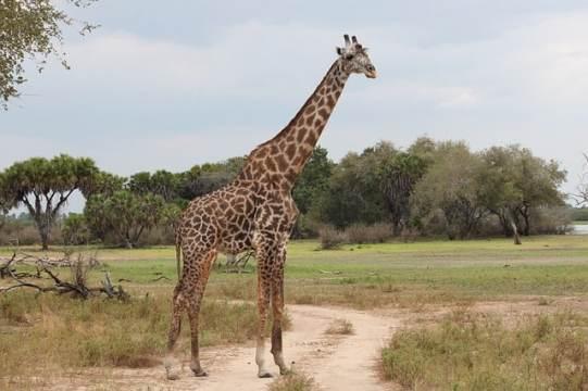 Serengeti-bucketlisttraveladvisors.com