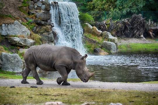 rhino-chobenationalpark-bucketlisttraveladvisors.com