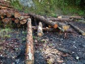 Wood Logs - FellFoot, Lake Windemere, Lake District - www.buckinghamvintage.co.uk