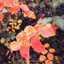 Autumn Leaves. Probably Elm. www.buckinghamvintage.co.uk