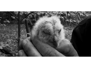 Tawny Owl conservation