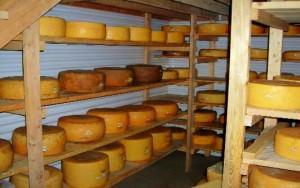 Hendricks cheese rounds; photo courtesy of Hendricks Farm & Dairy
