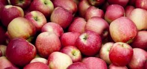 PageLines- apples_istock_crop.jpg