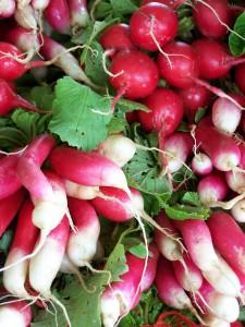 Radishes from Blooming Glen Farm at the Wrightstown Farmers Market