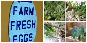 Opening Day 2014 at Wrightstown Farmers Market