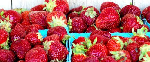 Shady Brook Farm strawberries; photo credit Lynne Goldman
