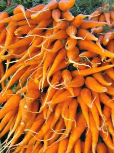 Carrots; photo credit Lynne Goldman
