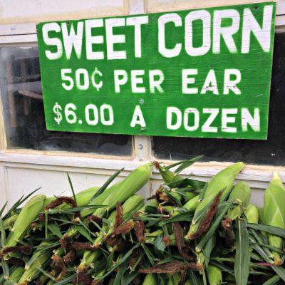 Corn_Slack Farm_2014