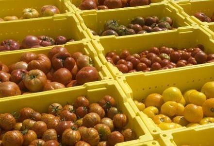 Rutgers Tomatoes