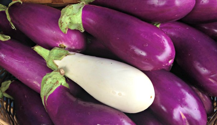Eggplants from Blooming Glen Farm; photo credit L. Goldman