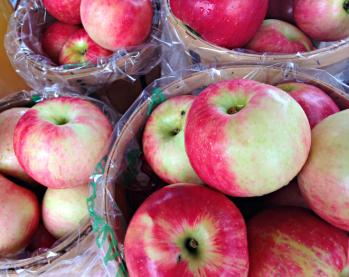 First apples from Solebury Orchards_photo credit Lynne Goldman
