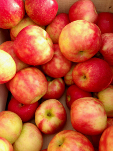 Honey crisp apples from Solebury Orchards_Oct 2014