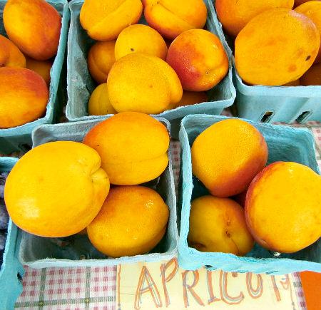 Apricots_Solebury Orchards; photo credit L. Goldman
