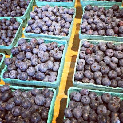 Blueberries_Manoff Market Garden_June 27 2016