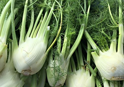 Fennel_Blooming Glen Farm_credit Lynne Goldman