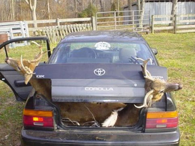 How to Transport a Deer in a Car
