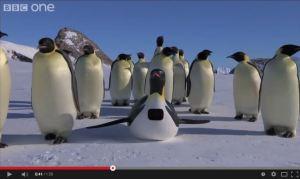 ペンギンのいじめ