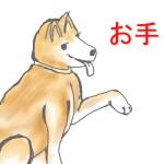 天才柴犬マリちゃん!youtube料理動画「邪魔されクッキング」