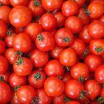 トマトの保存方法や期間は?旬や栄養分に選び方のコツ